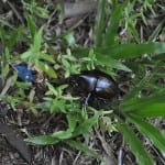 LAWN BEETLE PEST CONTROLLERS
